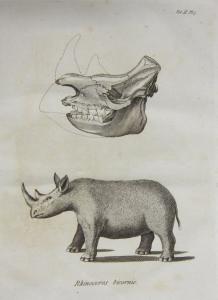 rhino_royal-ontario-museum_CC-BY-SA
